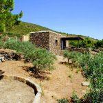 Gli oliveti – Dammuso Natura e Mare